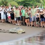 Turtle_photo1